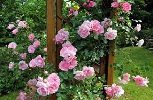 Klettergerüst Rosen Selber Bauen : Anleitung rankgitter selber bauen ohne viel aufwand